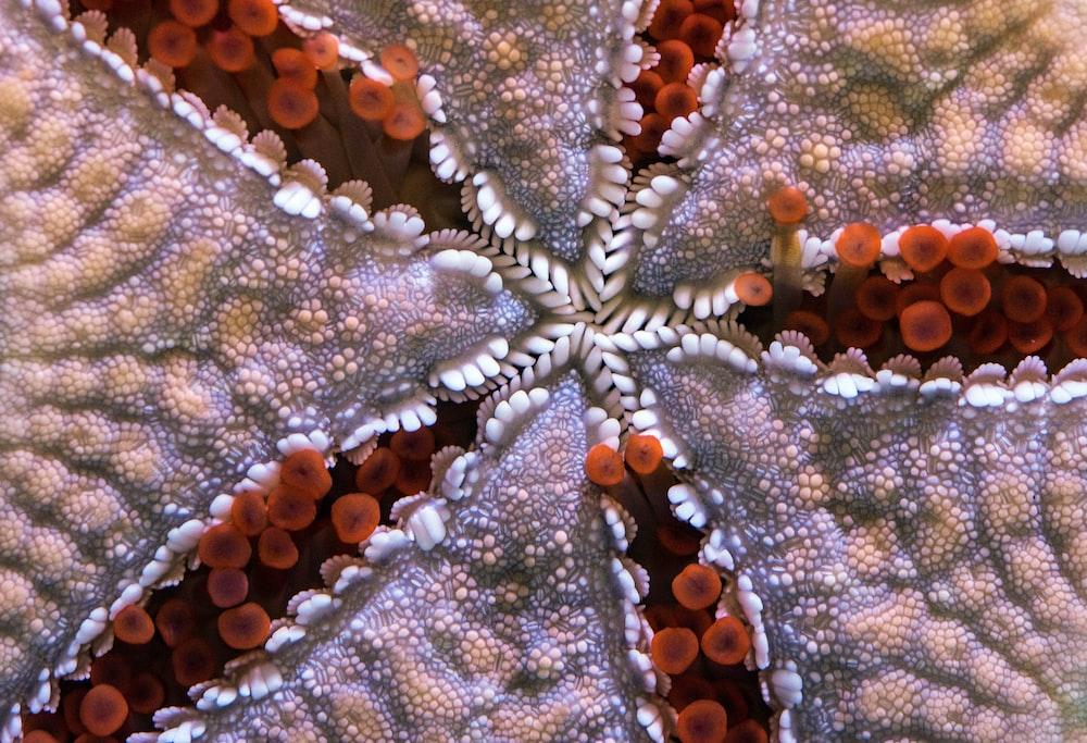 closeup photo of starfish