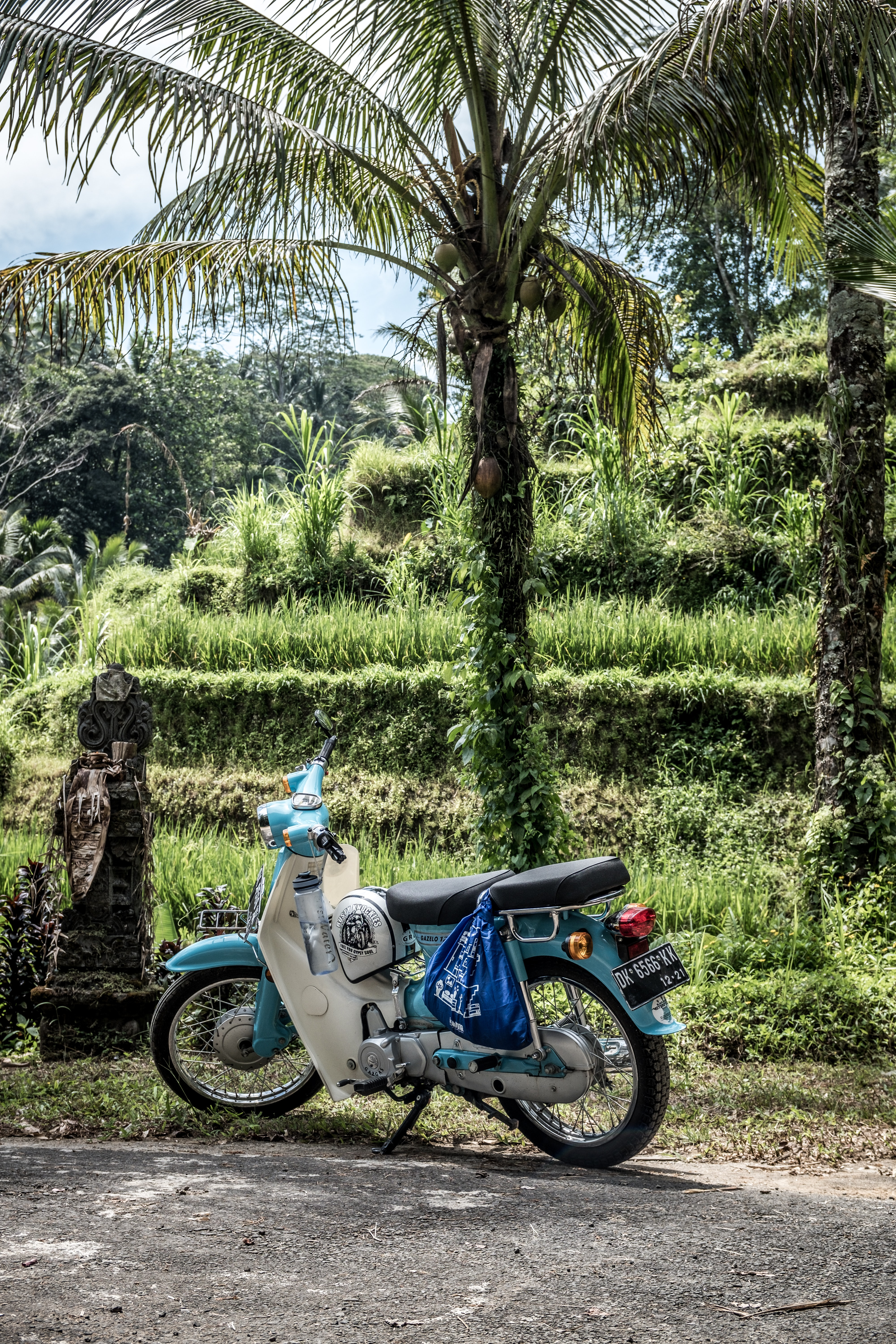 blue and white motorcycle parked under coconut tree