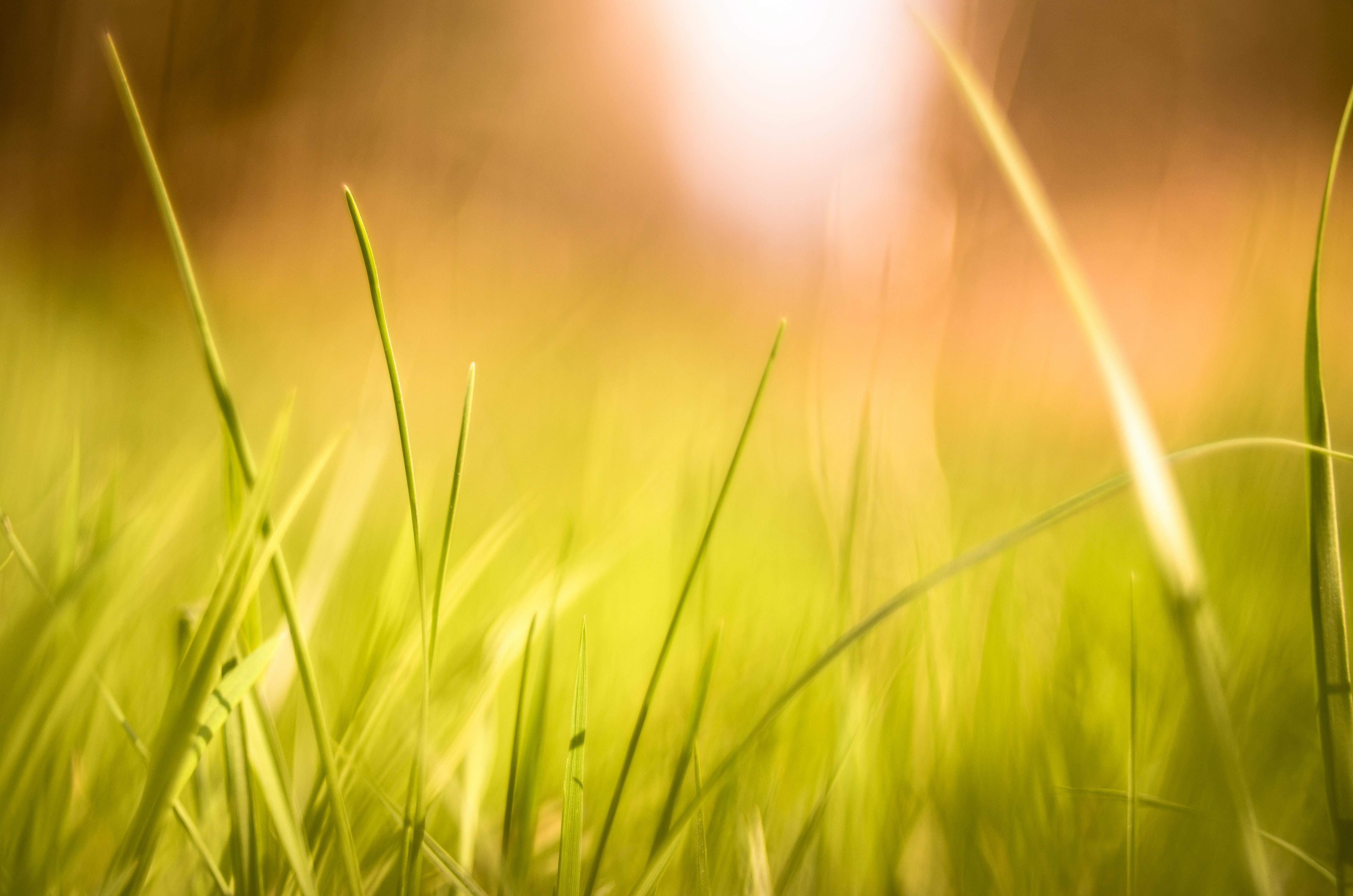 closeup photography of green grass field