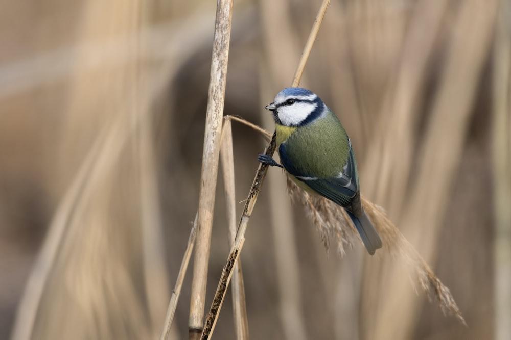 shallow focus photography of bird
