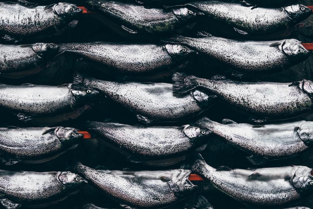 photo of raw fish
