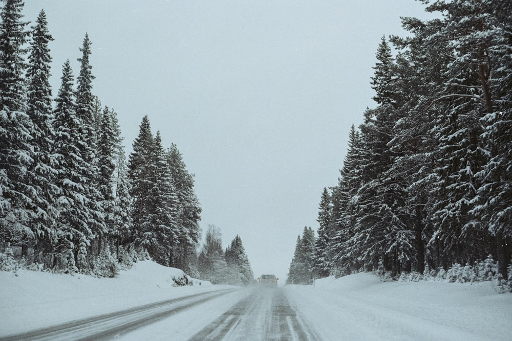 pine trees and road covered with snow during daytime