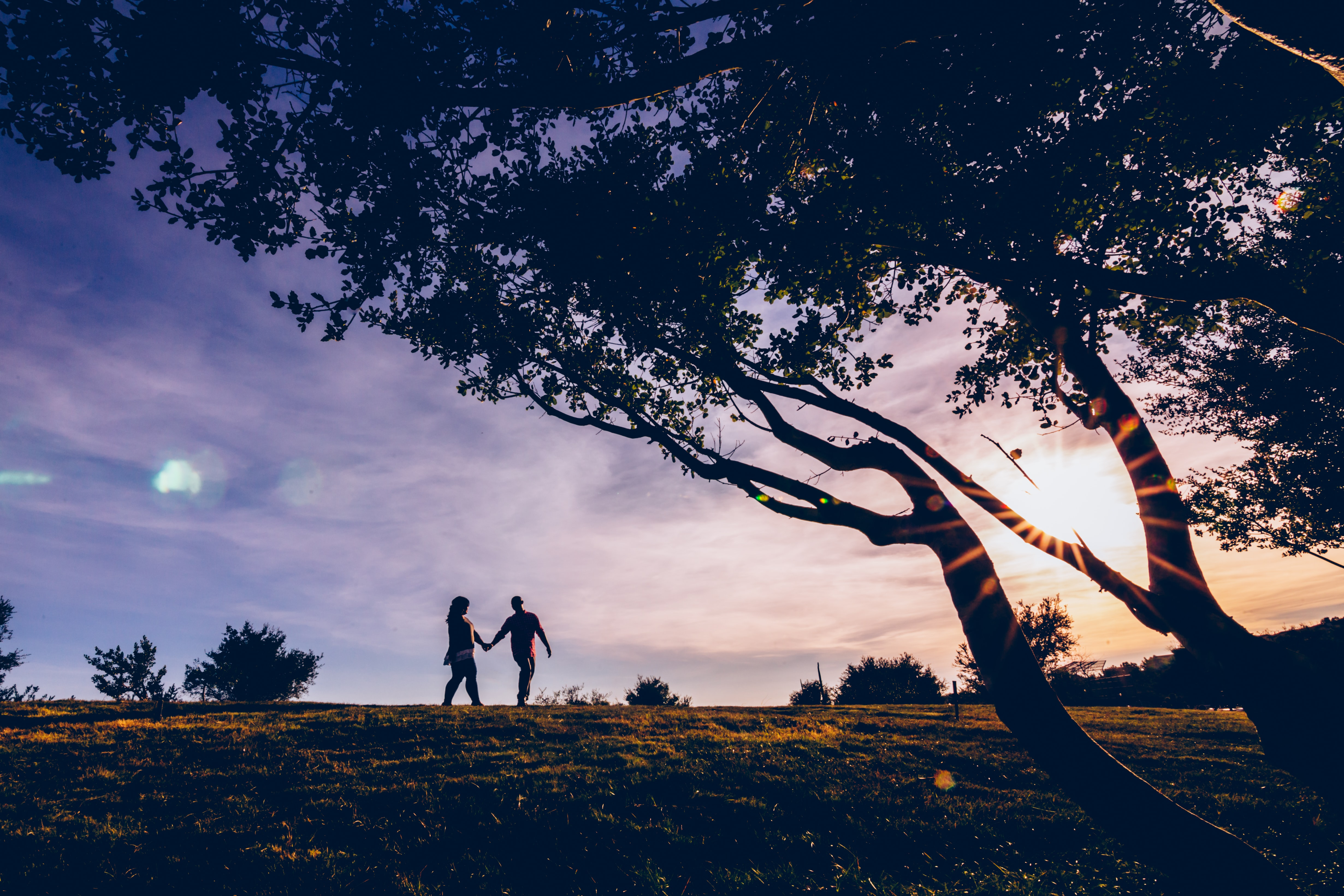 silhouette of couple walking near trees against light at daytime
