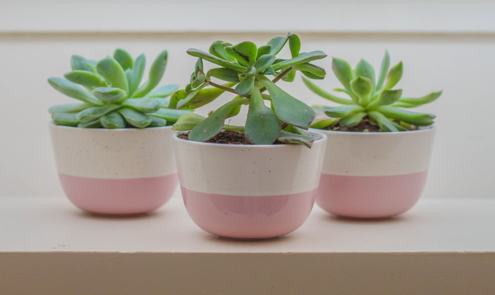 three green potted plants