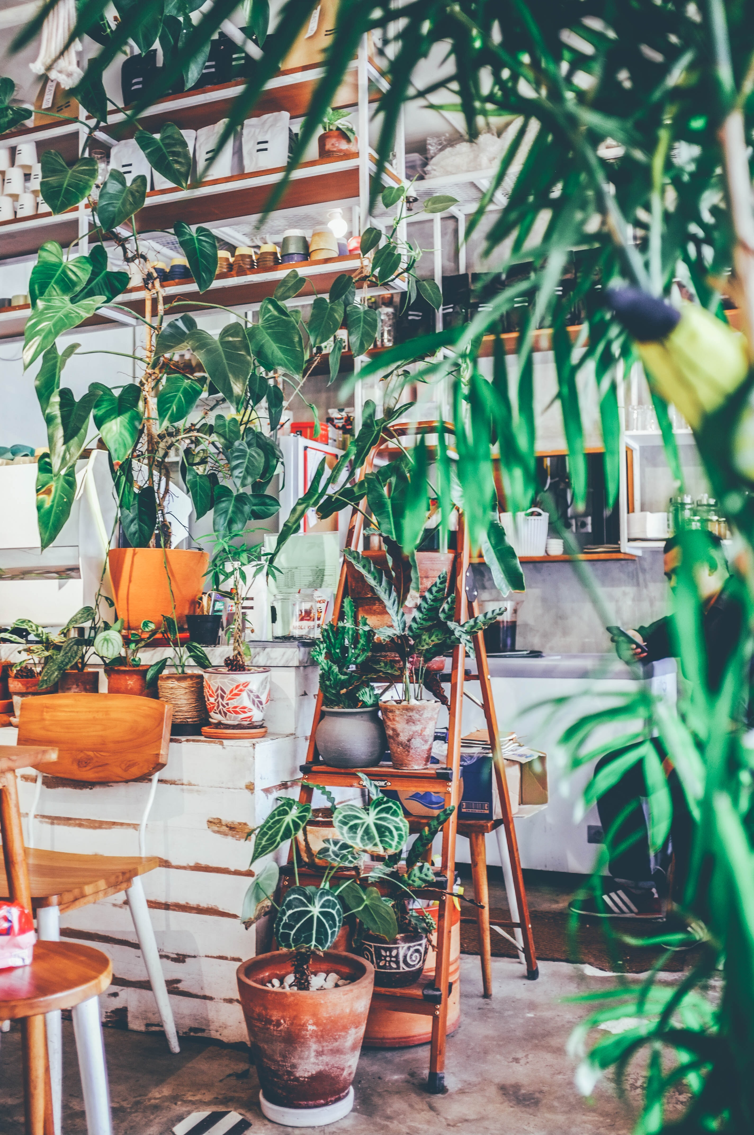pile of potted plants on A-frame ladder near chair and shelf