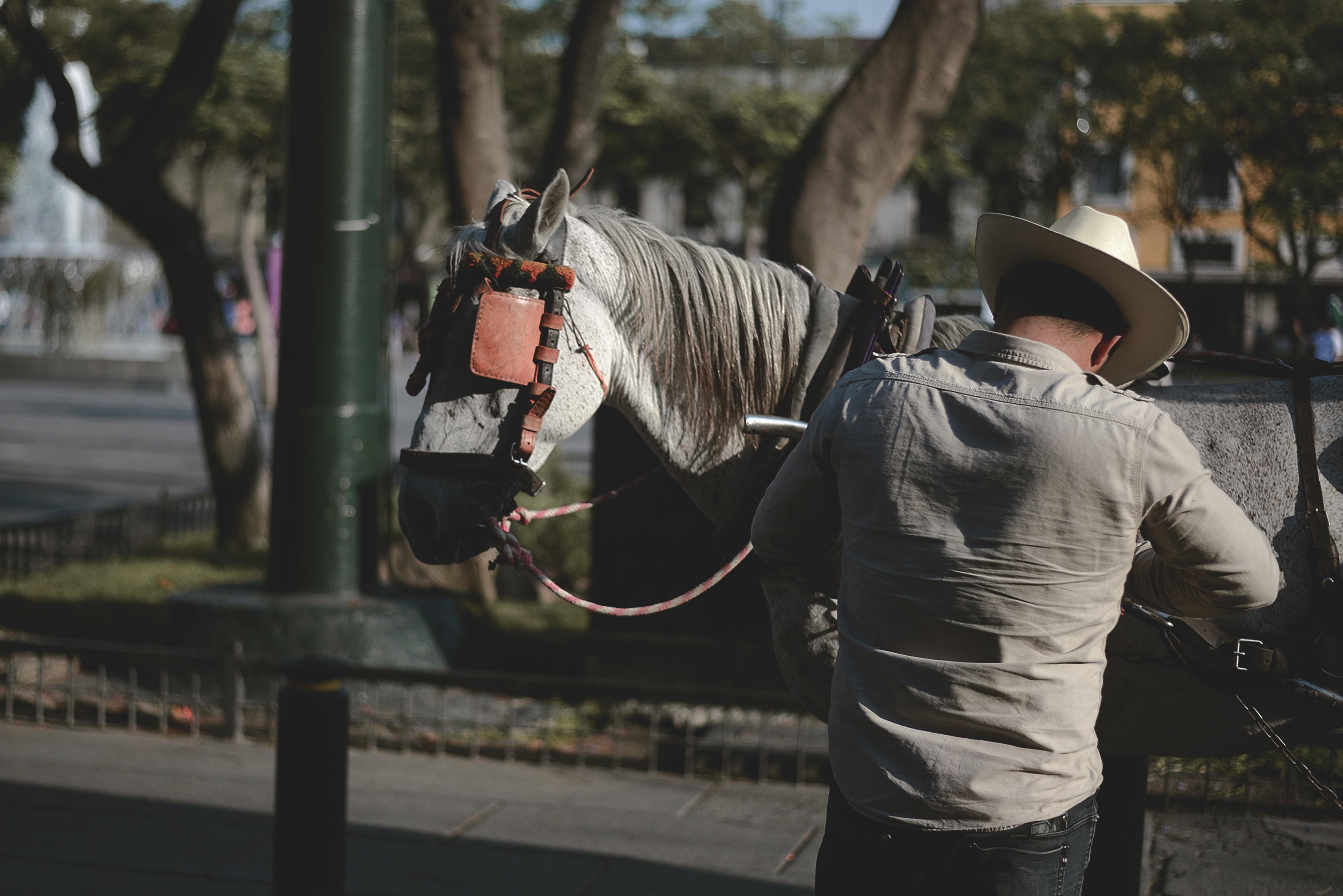 man wearing white dress shirt beside horse