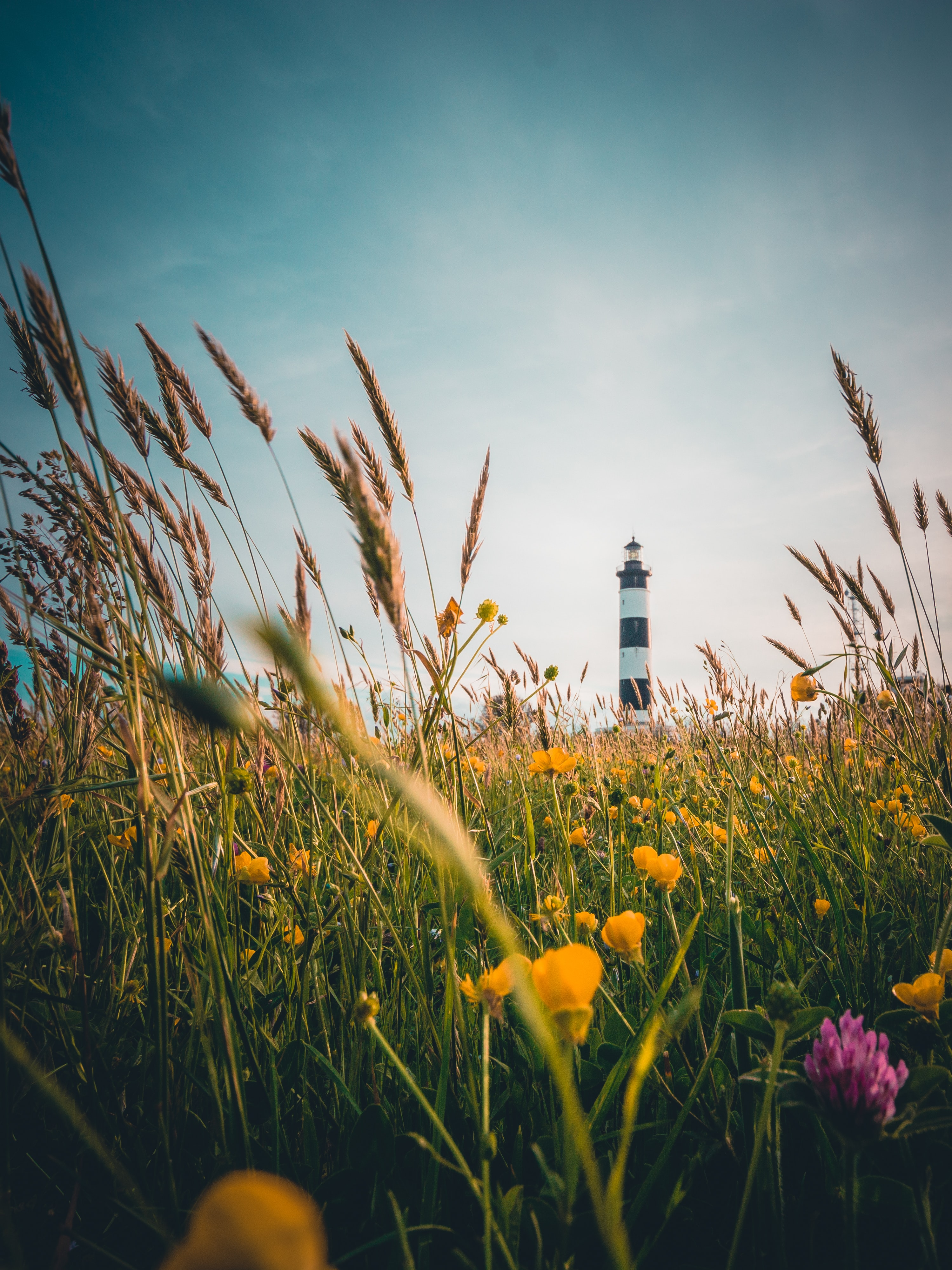 yellow flower field beside white and black lighthouse