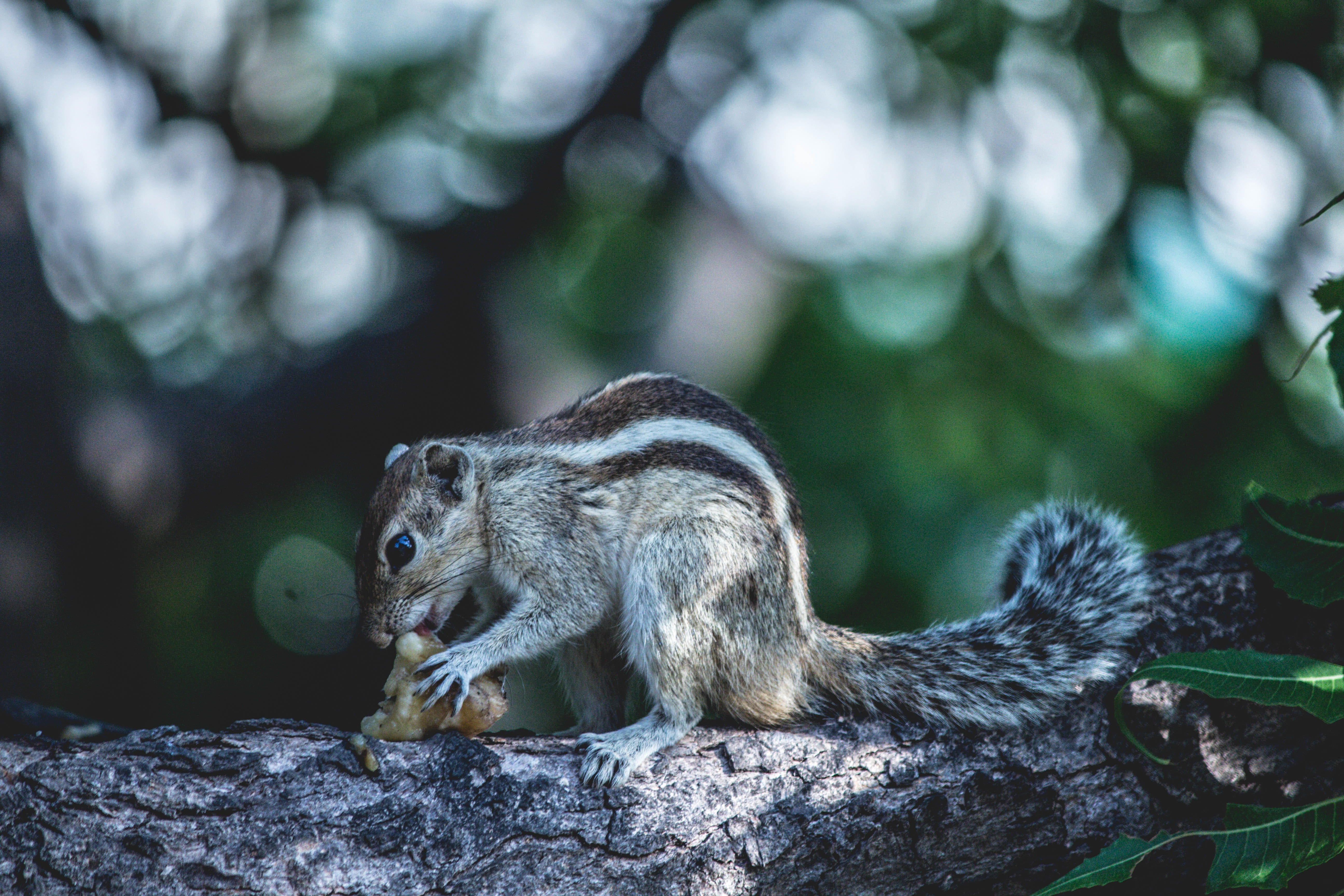 selective focus of black and gray squirrel on gray tree branch
