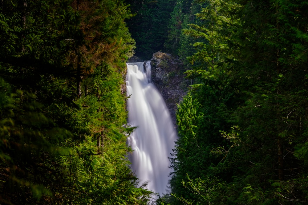 waterfalls beside tress