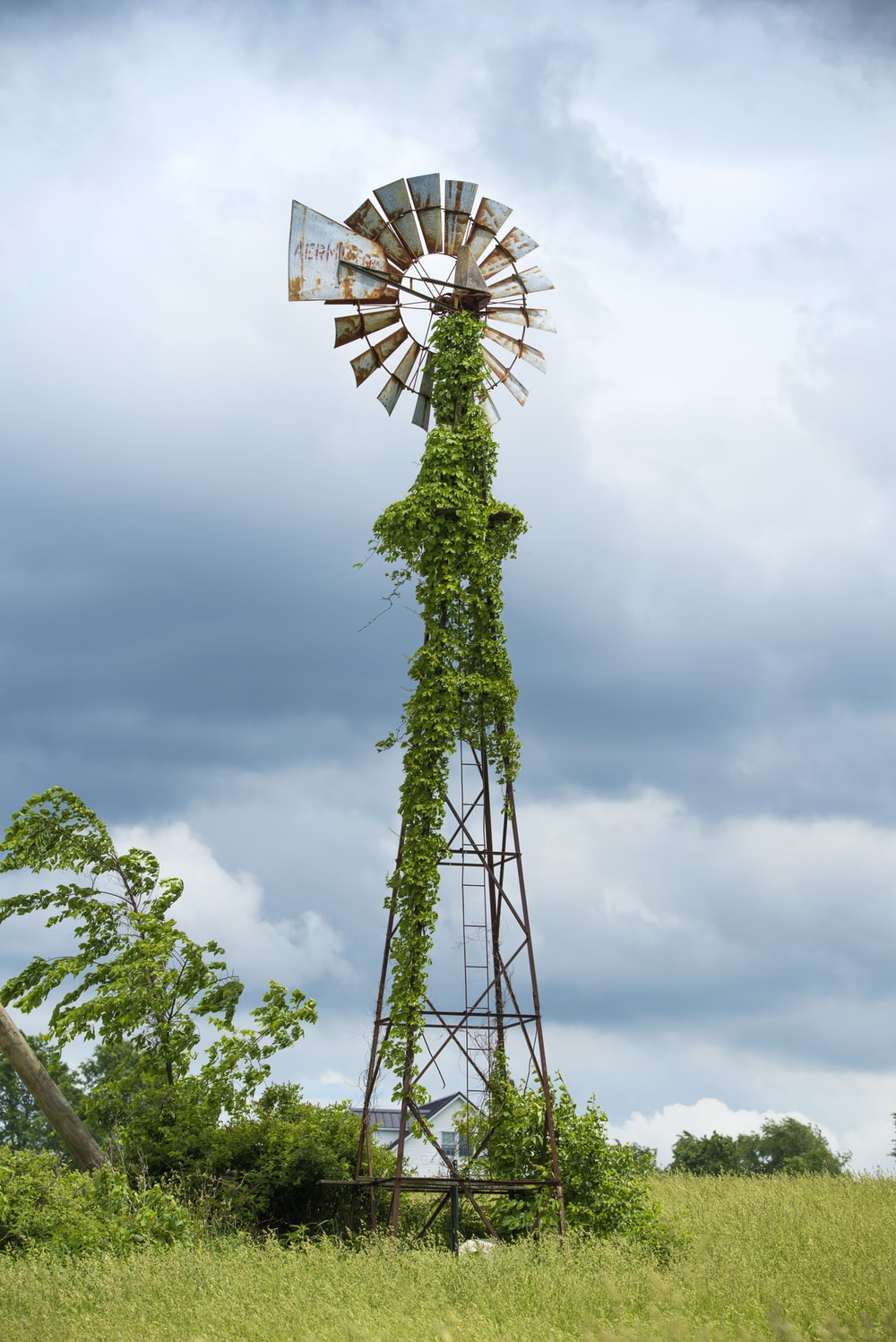 black and gray windmill with vine plants