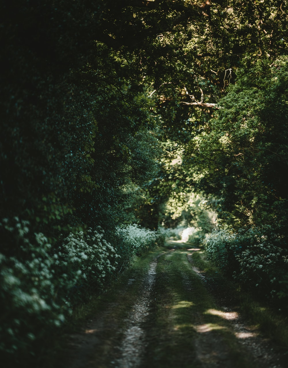 photo of dirt road surrounded by green trees