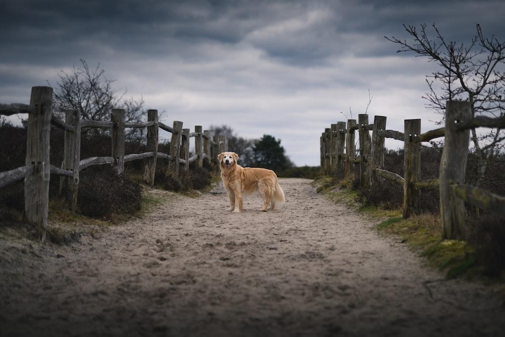 dog standing between wooden fence under dark cloudy sky