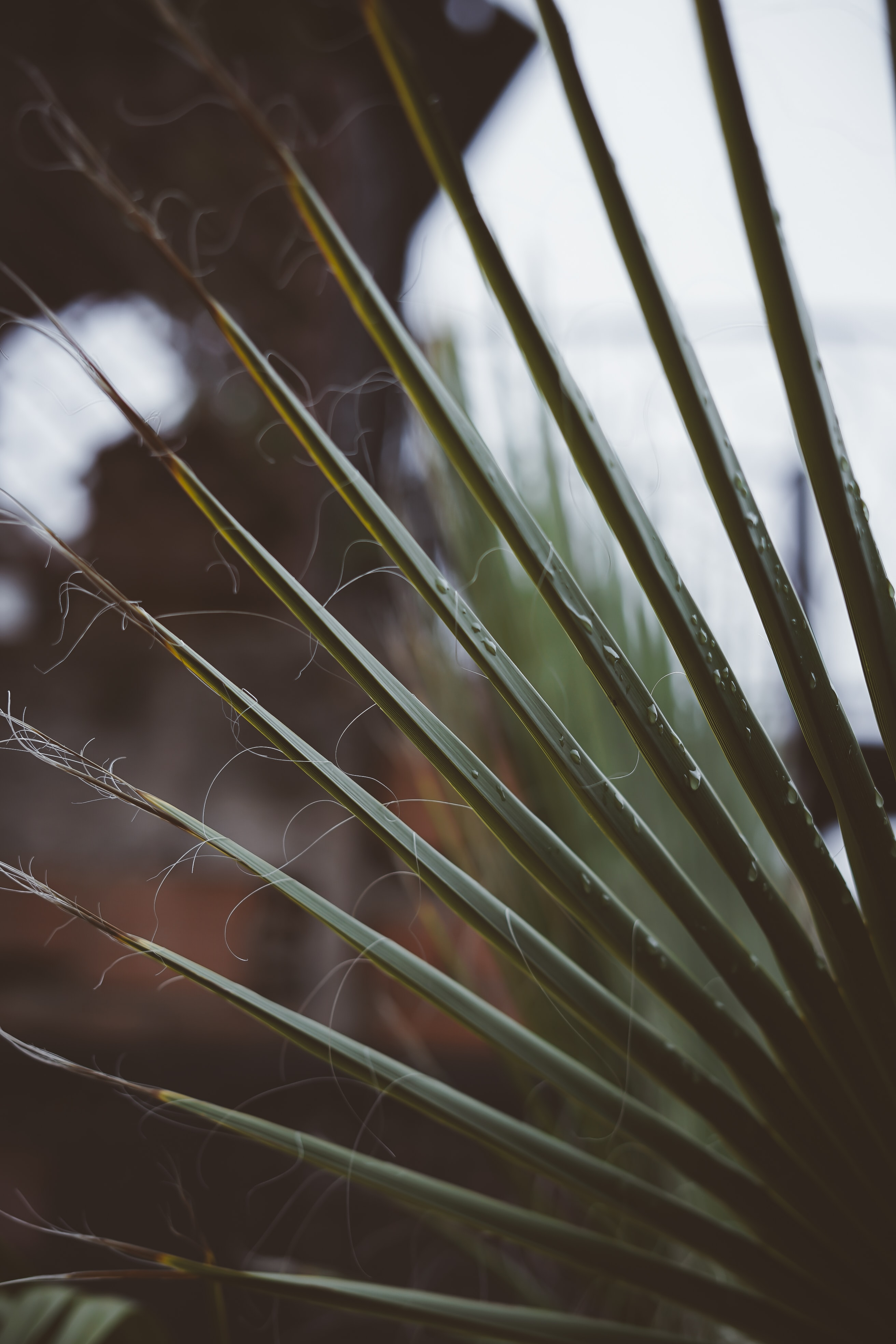 selective focus photography of green palm plant