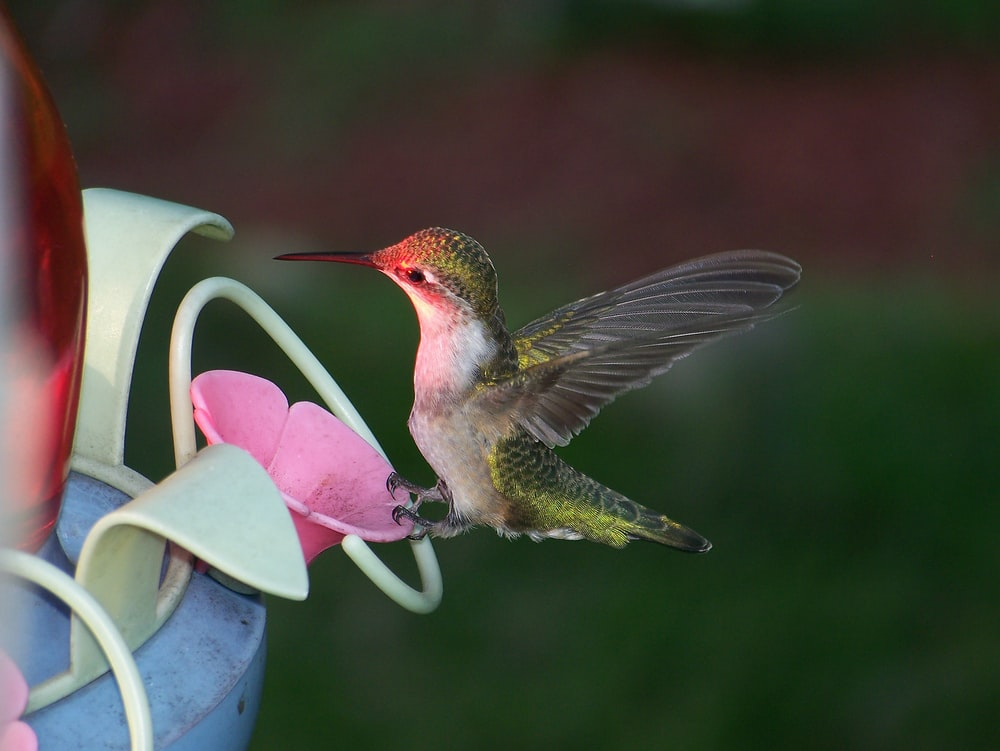 selective focus photo of hummingbird perching on pink plastic toy
