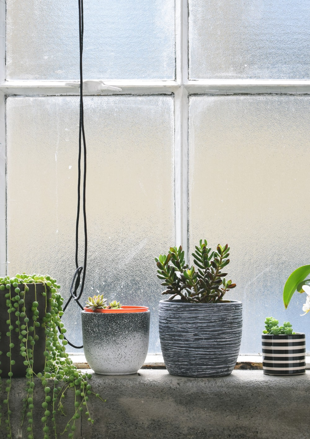 four potted plants placed near window