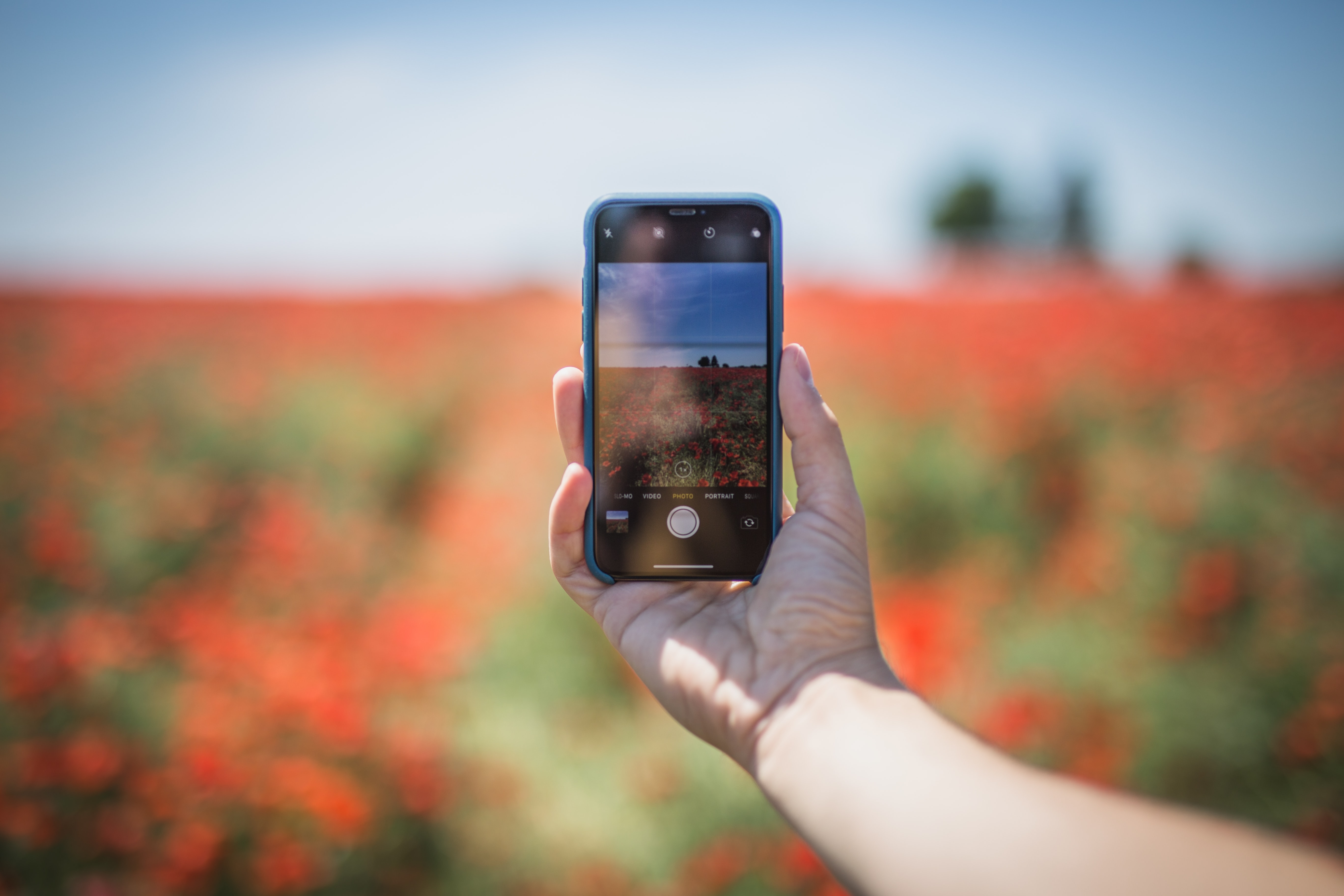 person holding black smartphone taking photo of flower field