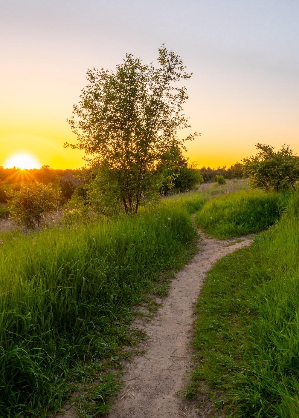 pathway near green grasses during sunrise
