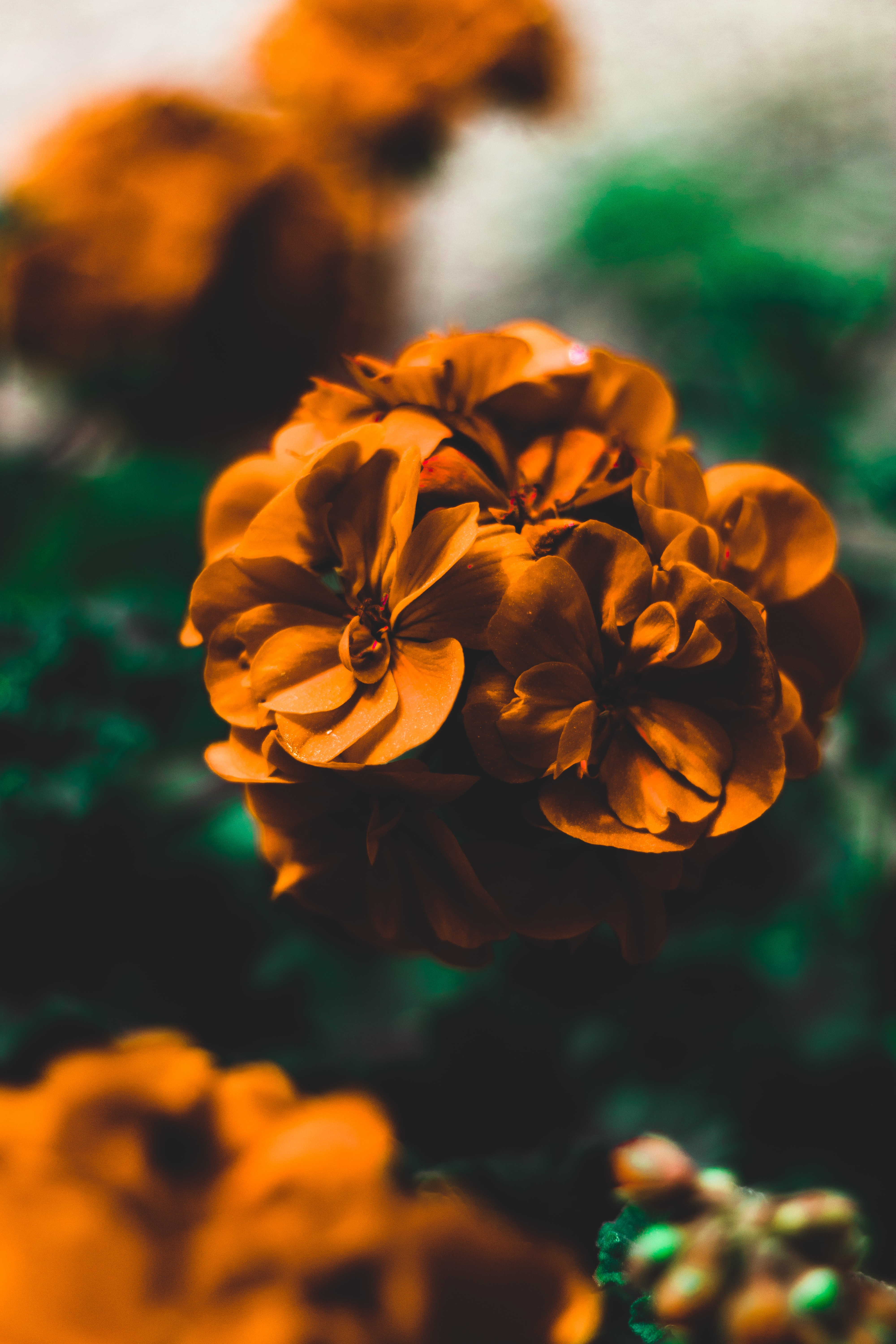 selective focus photography of orange fowers