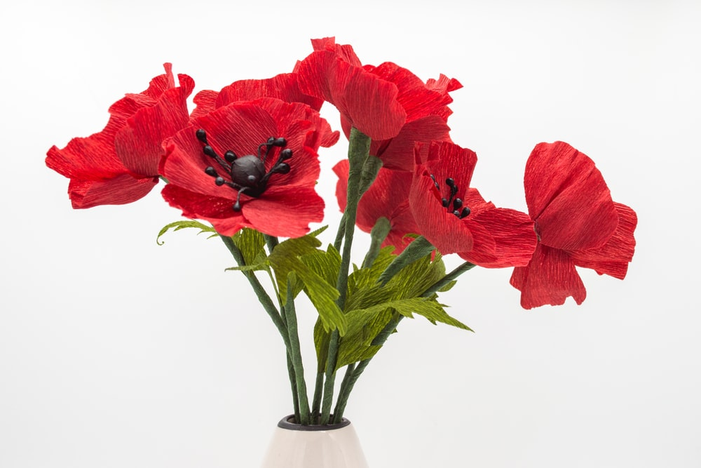 Paper Poppy Pictures Download Free Images On Unsplash