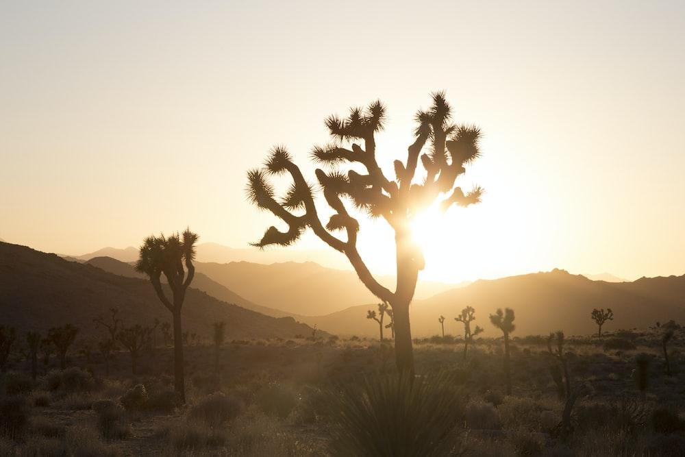 plant in desert with sun glaring behind