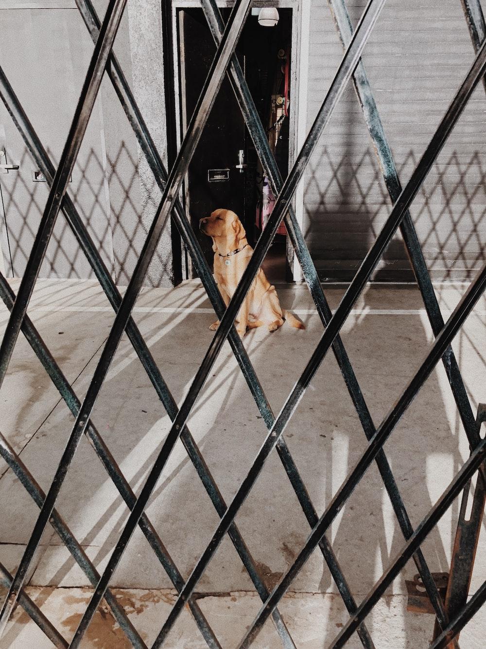 Labrador retriever at daytime