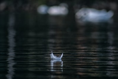 white feather on body of water in shallow focus