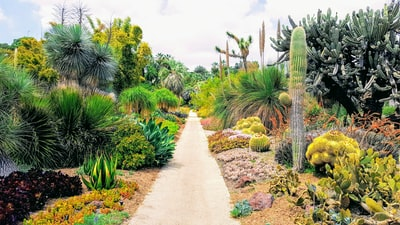 pathway beside cactus plants san marino zoom background