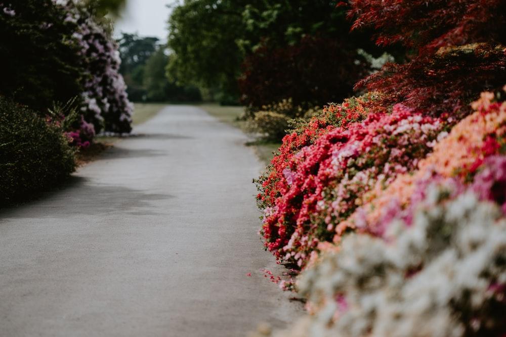 selective focus photography of flower garden