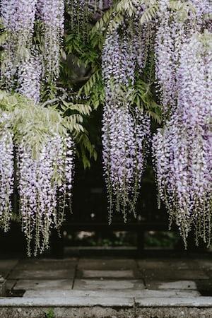 1648. Növények világa
