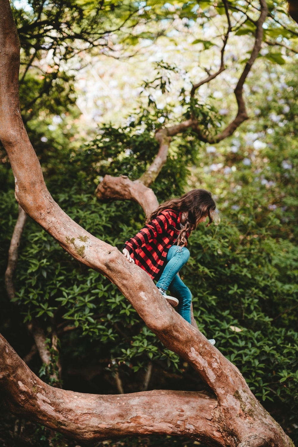 woman in red and black checkered top sitting on tree branch during daytime