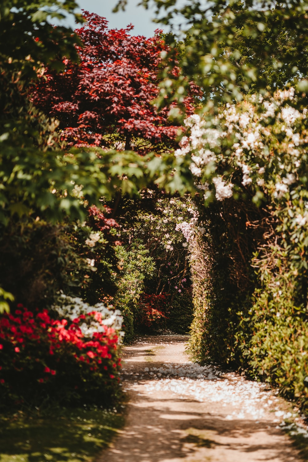 Colourful Spring path at Exbury Gardens photo by Annie Spratt ...