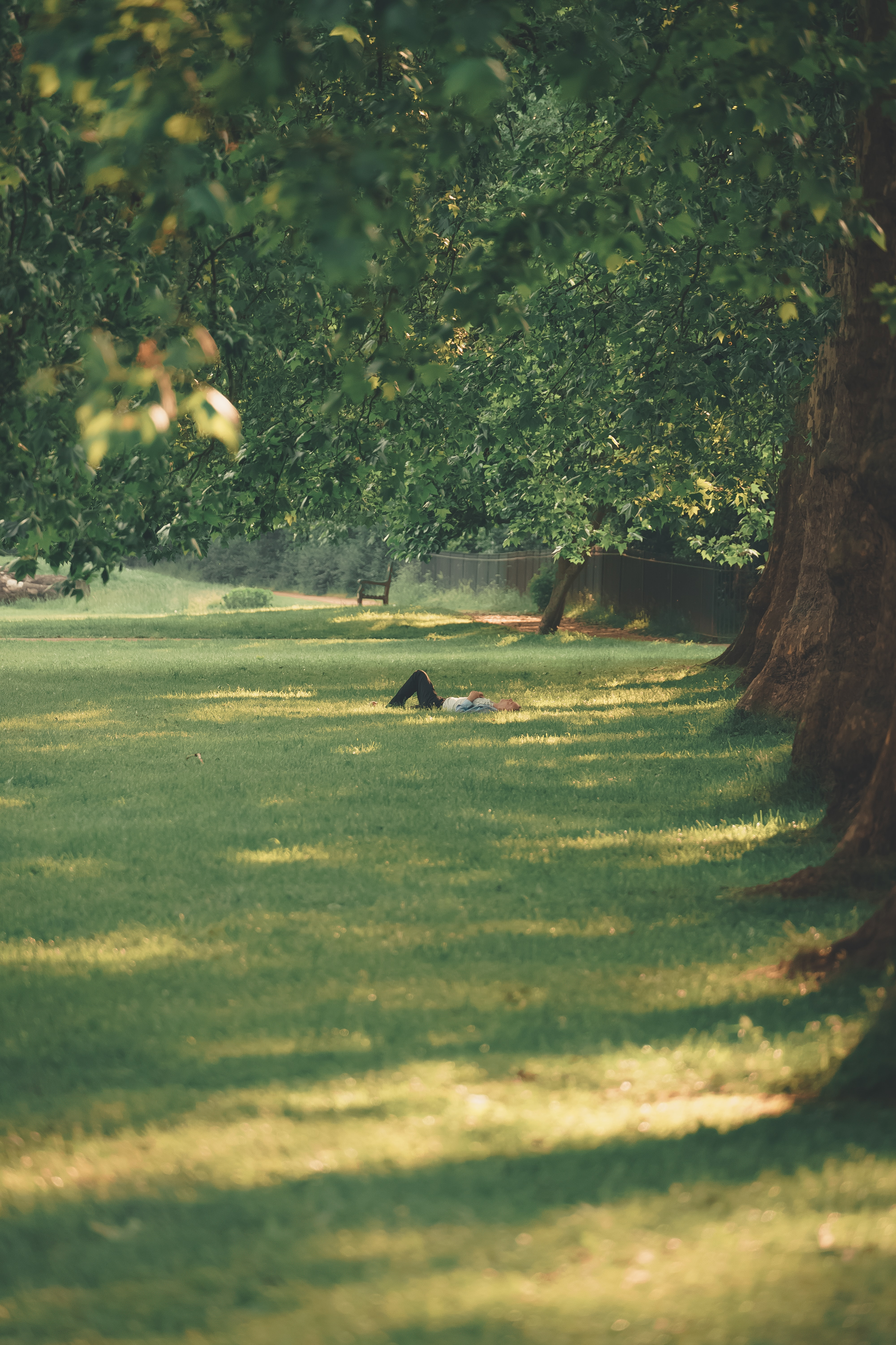 person lying on grass