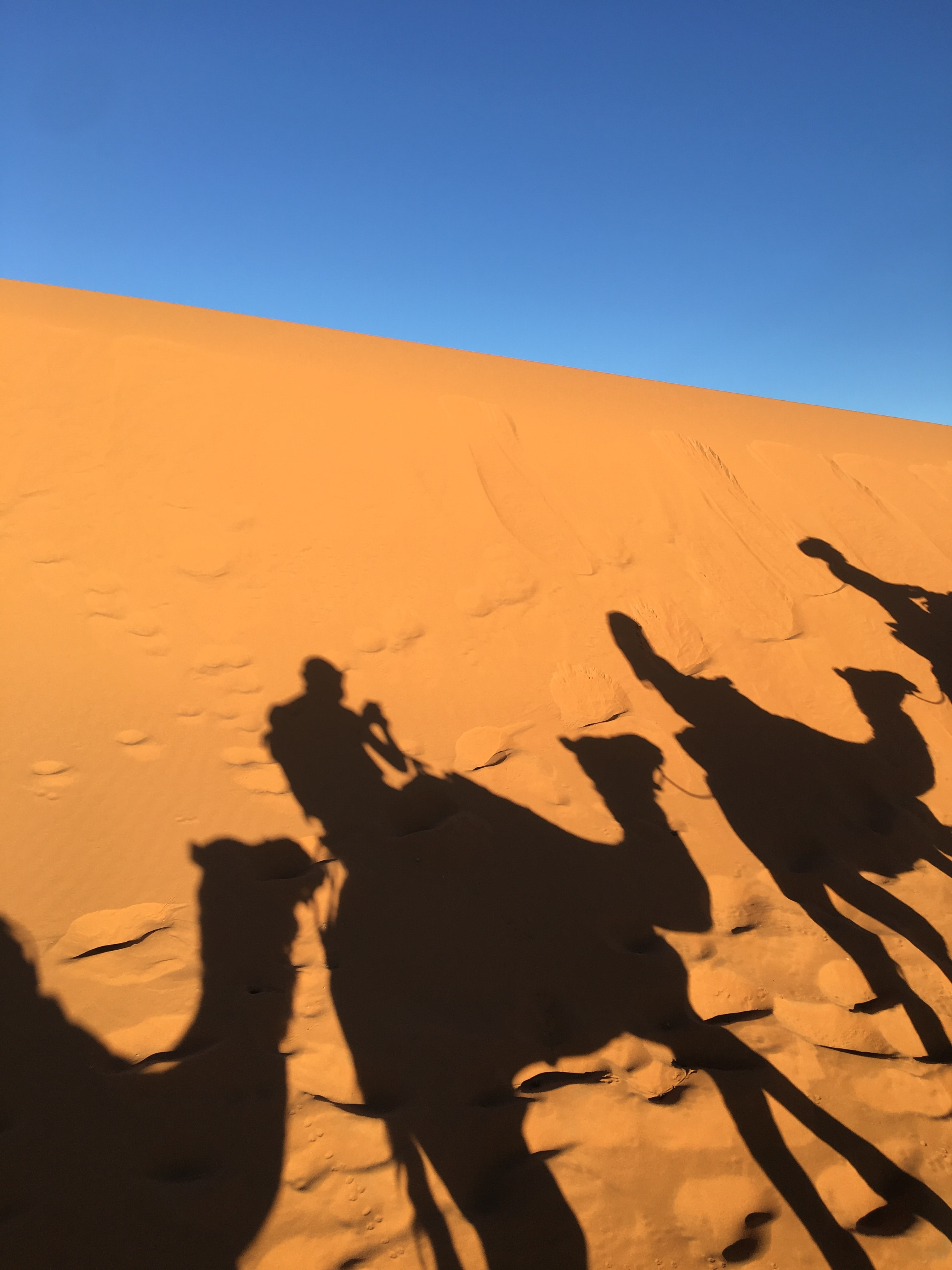 silhouette of four person riding camel on desert during daytime