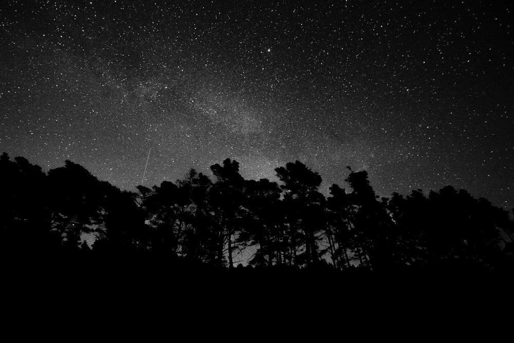 silhouette of forest during nighttime