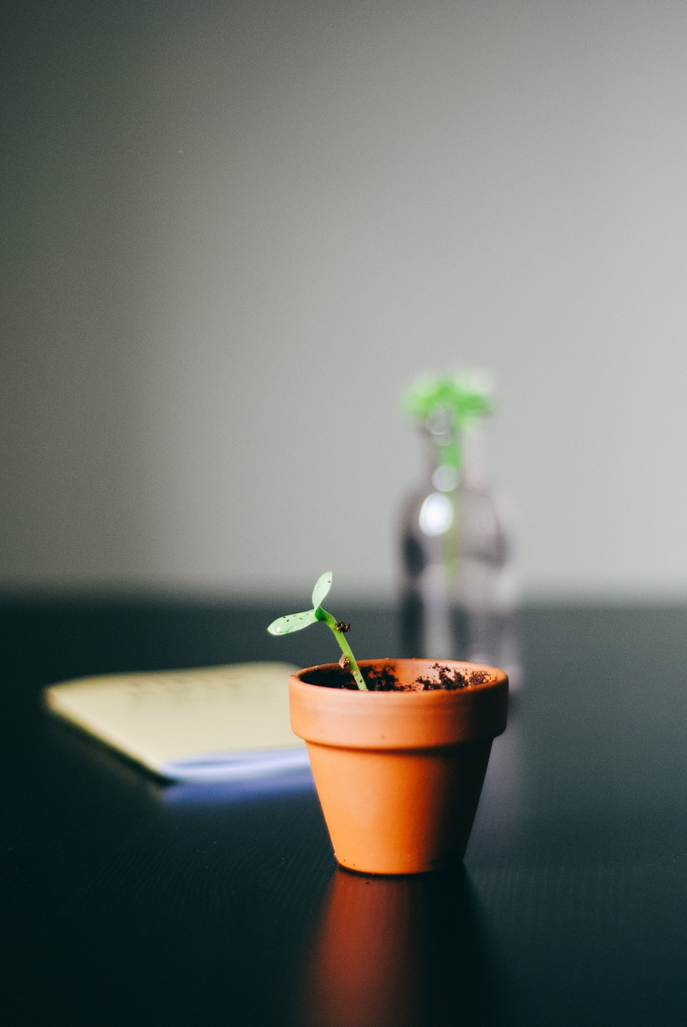 green leafed plant with pot on black desk