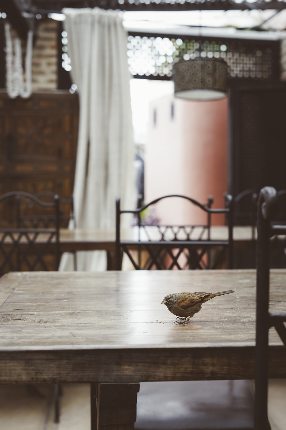gray bird on brown wooden table