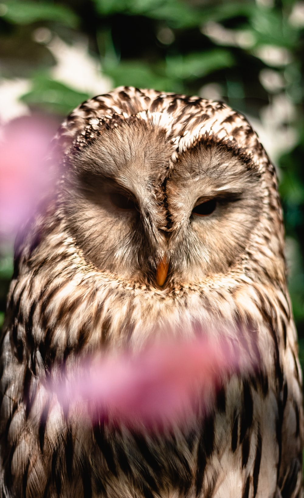 selected focus photo of brown owl