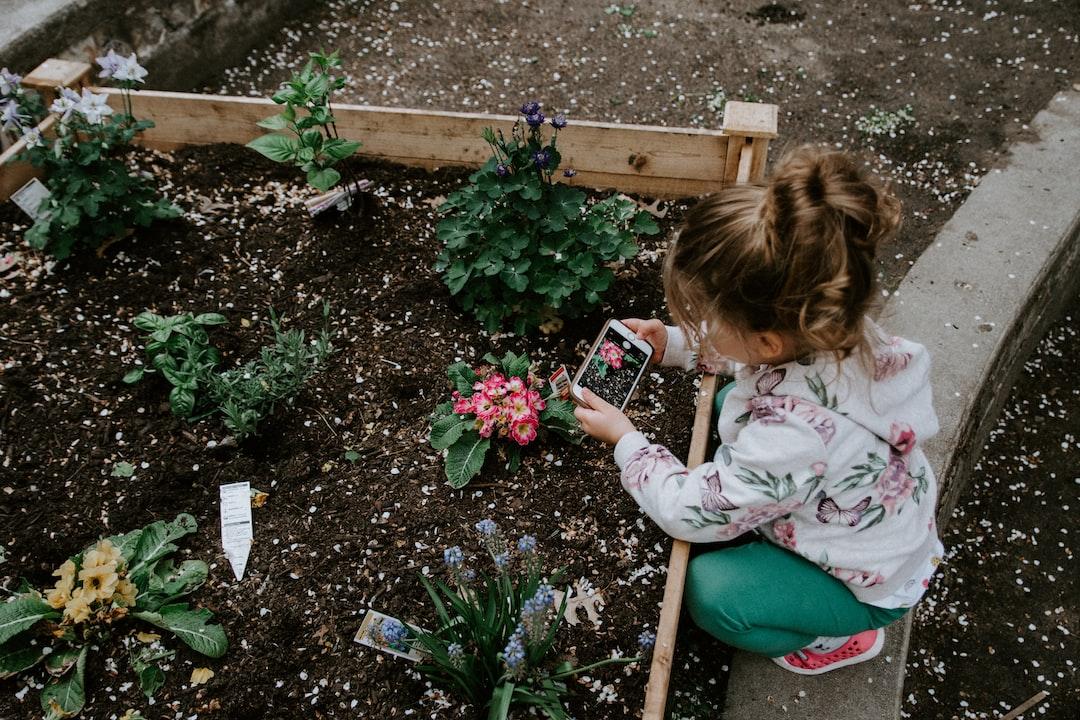 A young girl toddler crouches over an outdoor garden box to take photos of