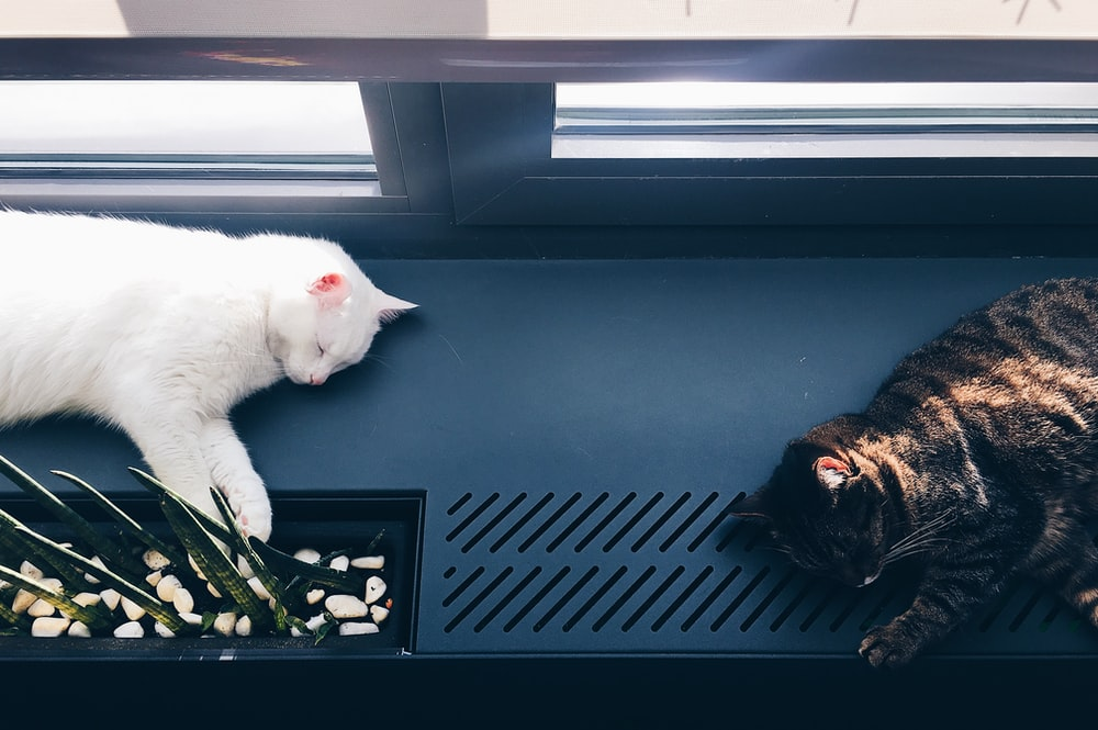 person taking photo of white and black cats on black surface