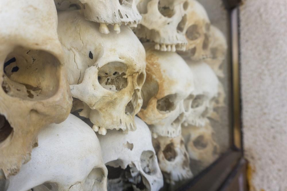 human skull decor