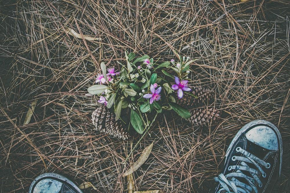 person wearing sneakers beside petaled flower