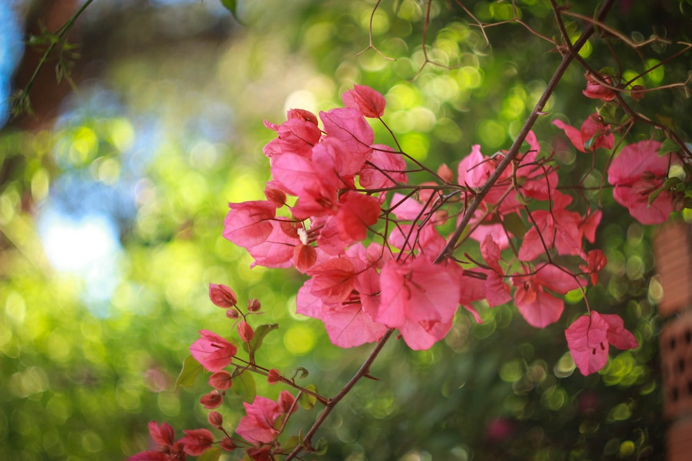 close up photography pink petaled flower