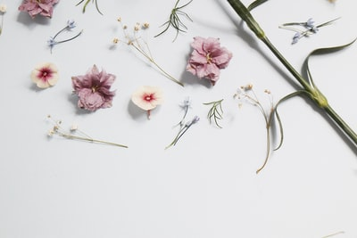 pink flowers flatlay zoom background