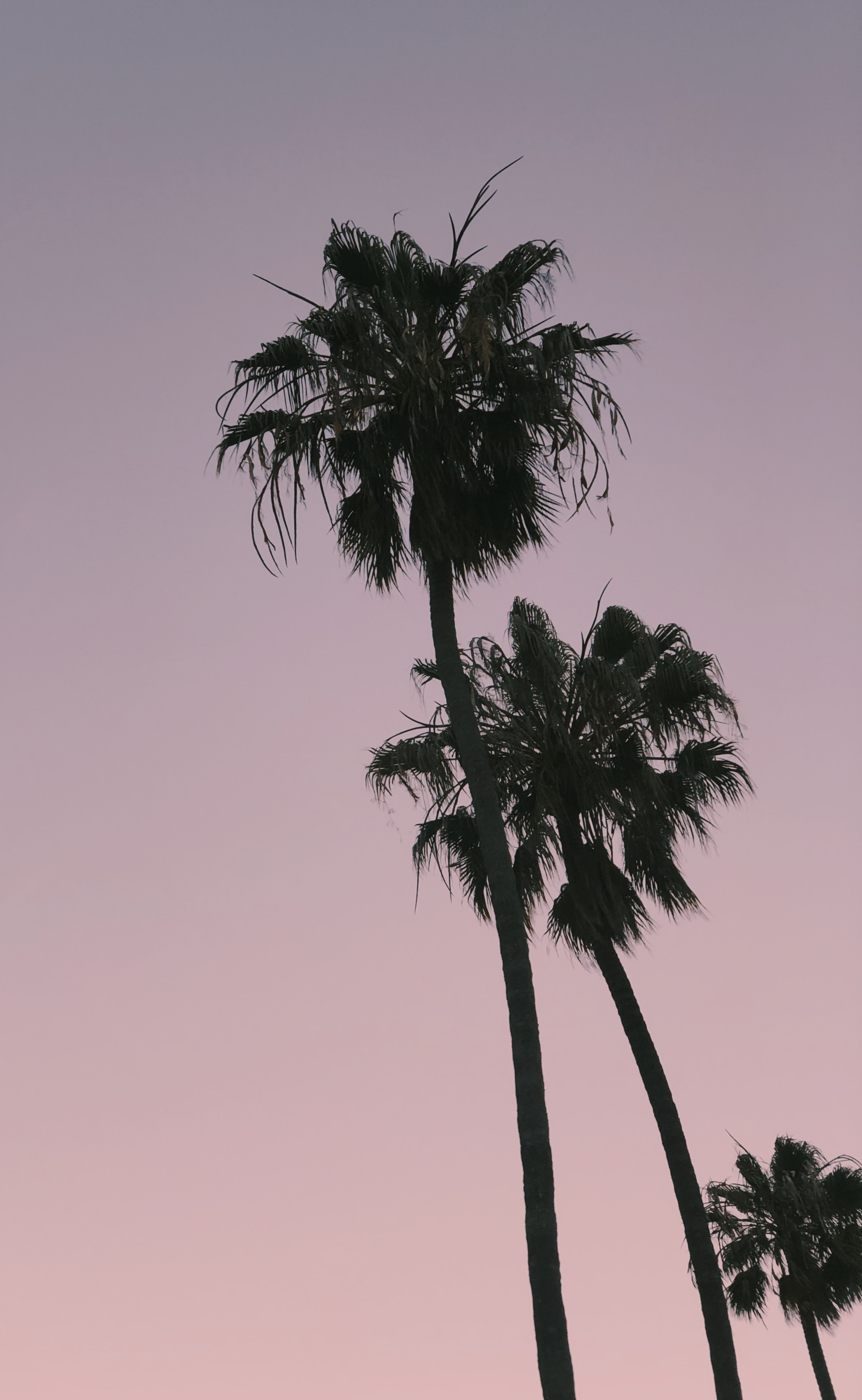 three palm trees during golden hour