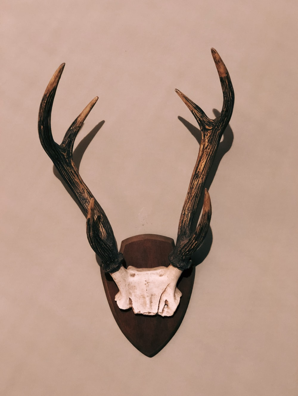brown and black antler horn taxidermy
