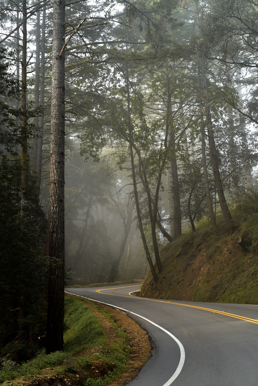 gray asphalt road between of trees