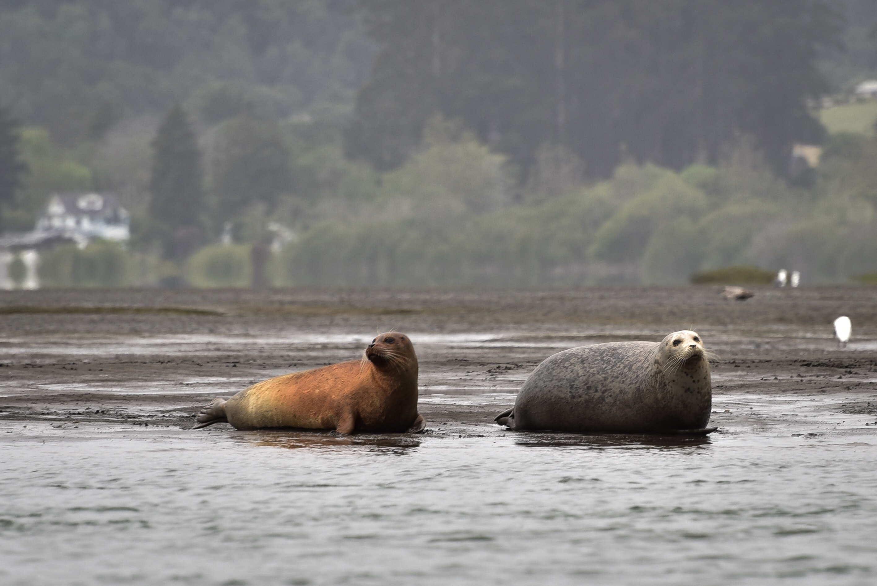 two sea lion on seashore