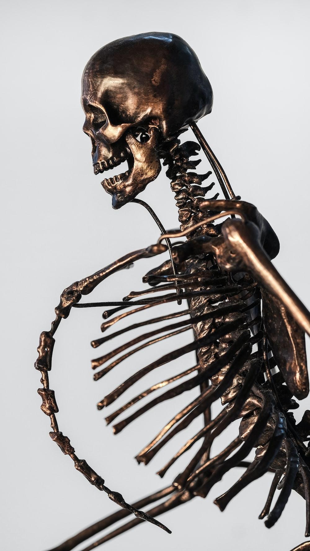 Skeleton Pictures Hd Download Free Images On Unsplash