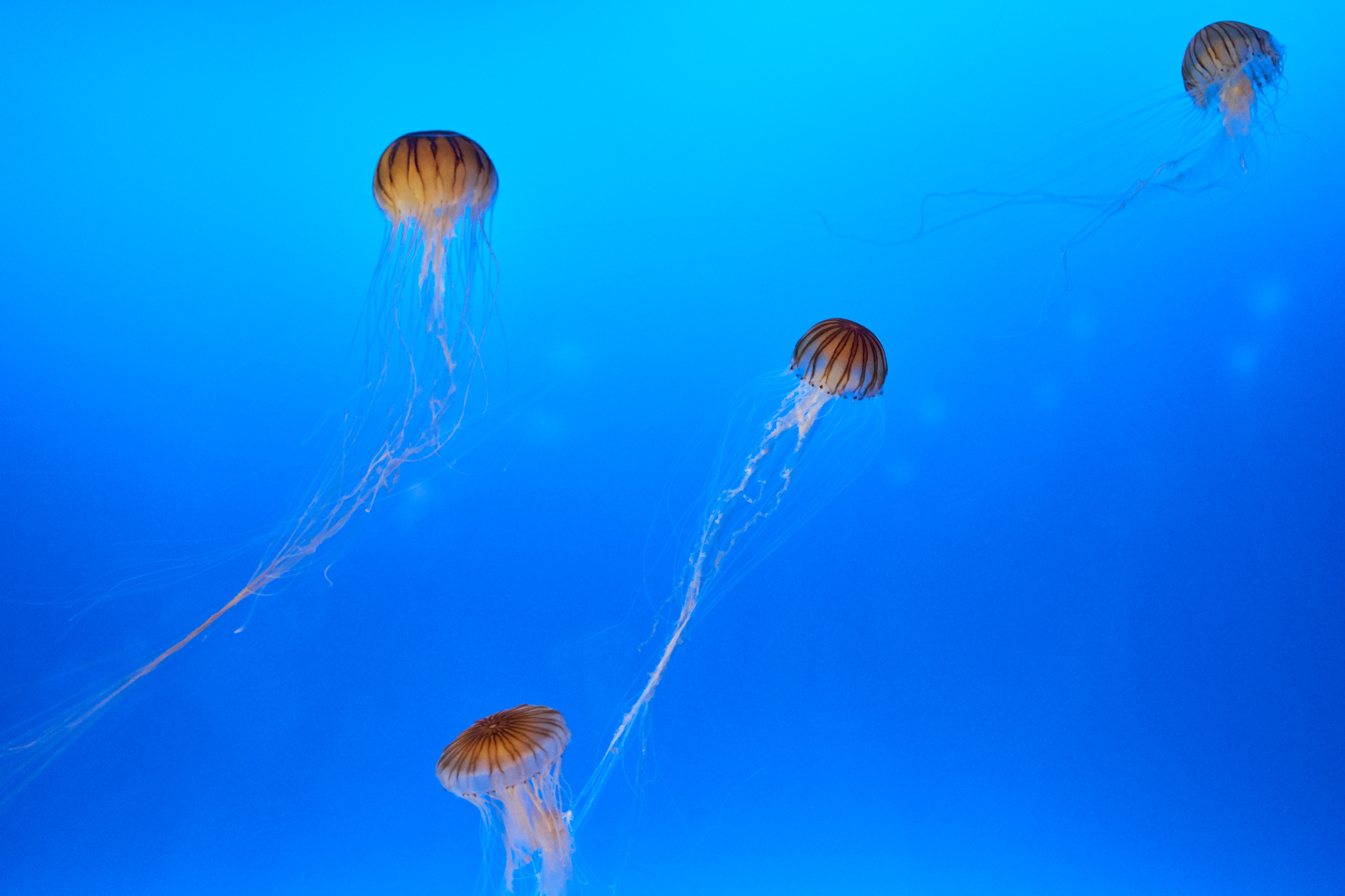 school of jelly fishes