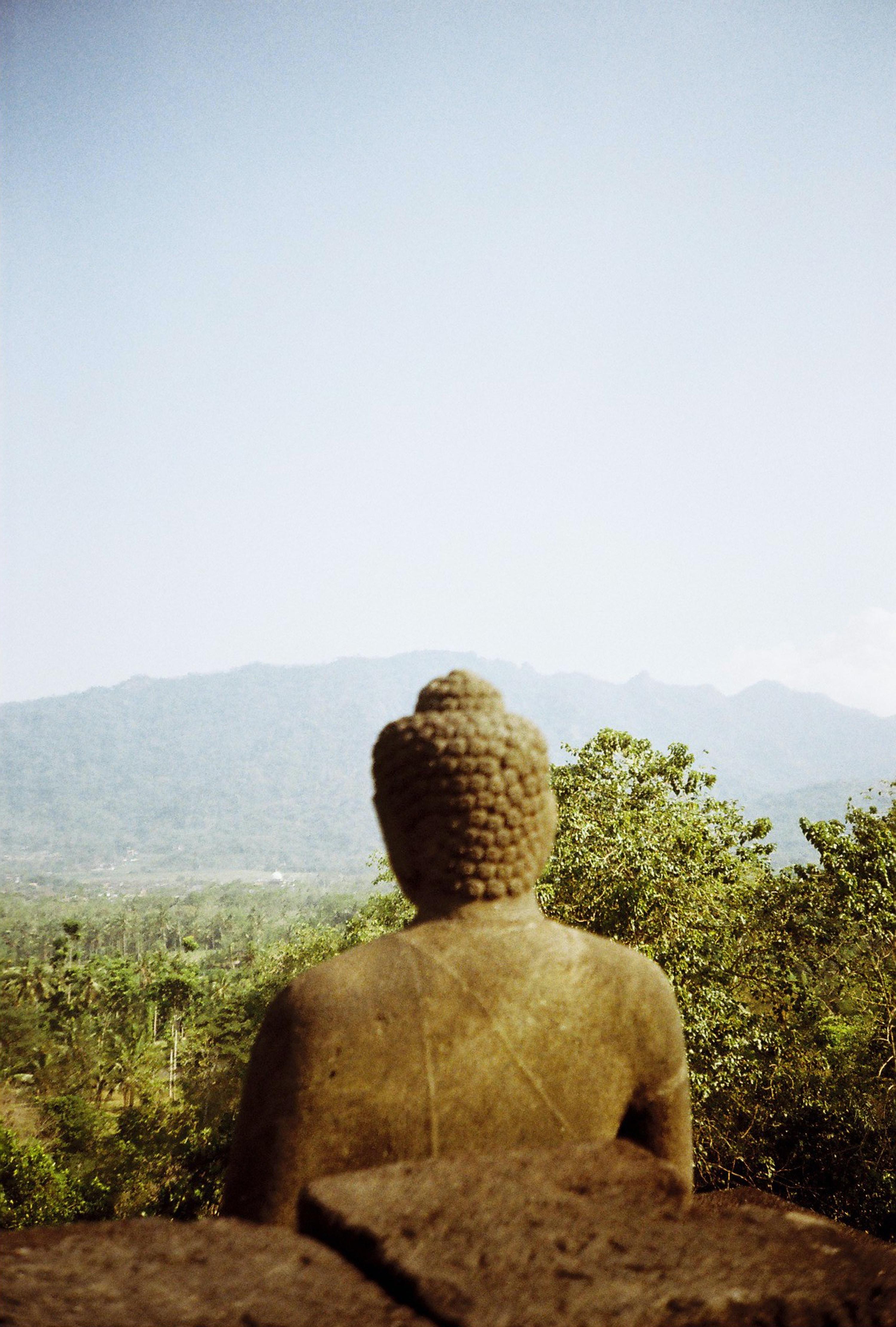 gray concrete Buddha statue near green leaf trees